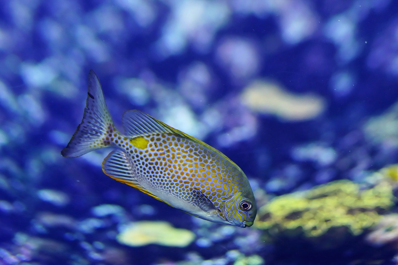 Top 10 most expensive exotic fishes in the world quick for Most expensive aquarium fish