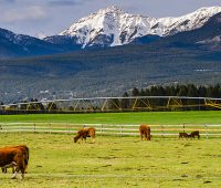Largest Ranch In The world
